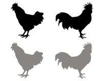 Silueta de los gallos Foto de archivo