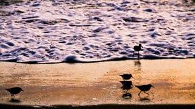 Silueta de los pájaros de la línea de la playa imagen de archivo libre de regalías