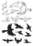 Silueta de los pájaros en vuelo Foto de archivo libre de regalías