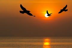 Silueta de los pájaros que vuelan en tiempo de la puesta del sol Fotografía de archivo