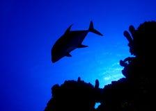 Silueta de los pescados Fotografía de archivo