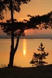 Silueta de los pinos Fotos de archivo