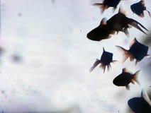 Silueta de oro de los pescados foto de archivo