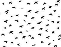 Silueta de pájaros Stock de ilustración