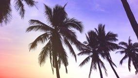 Silueta de palmas en la playa en la puesta del sol foto de archivo