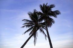 Silueta de palmas en la playa en la puesta del sol imagen de archivo libre de regalías