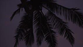 Silueta de palmeras contra el cielo en la puesta del sol almacen de video