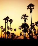 Silueta de palmeras en Tailandia Imagen de archivo libre de regalías