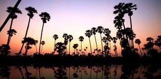 Silueta de palmeras en Tailandia Foto de archivo libre de regalías