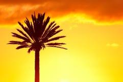 Silueta de Palmtree en el fondo del cielo de la puesta del sol Foto de archivo libre de regalías