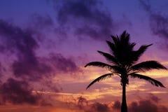 Silueta de Palmtree en salida del sol en trópico Foto de archivo libre de regalías