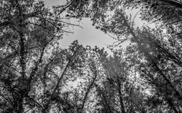 Silueta de ramas altas Fotografía de archivo libre de regalías
