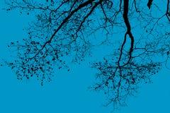Silueta de un árbol fotos de archivo
