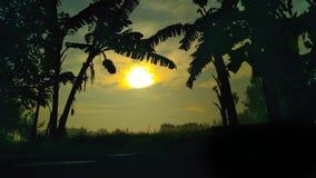 silueta de un árbol de plátano Imagen de archivo libre de regalías