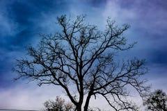 Silueta de un árbol del invierno Foto de archivo libre de regalías