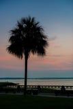 Silueta de un árbol del Palmetto fotografía de archivo