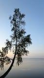 Silueta de un árbol en el amanecer Fotos de archivo libres de regalías