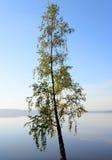 Silueta de un árbol en el amanecer Fotografía de archivo