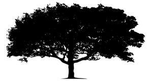 Silueta de un árbol solitario Fotos de archivo