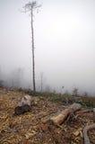 Silueta de un árbol solitario Imagenes de archivo