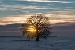Silueta de un árbol solo grande imagenes de archivo
