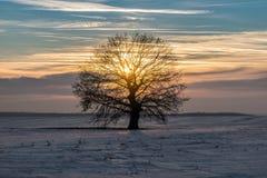 Silueta de un árbol solo grande imagen de archivo