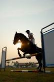 Silueta de un caballo fotografía de archivo