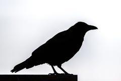 Silueta de un cuervo Imagen de archivo libre de regalías