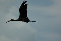 Silueta de un egret Foto de archivo libre de regalías