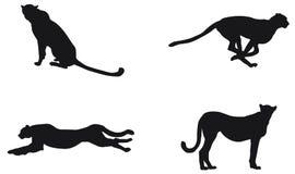 Silueta de un guepardo que se sienta, coloc?ndose y corriendo ilustración del vector