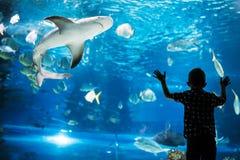 Silueta de un muchacho que mira pescados en el acuario imagenes de archivo