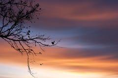 Silueta de un pájaro en rama de árbol en la puesta del sol Fotos de archivo