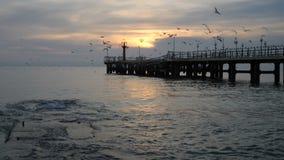 Silueta de un par contra el mar y las gaviotas que vuelan almacen de video