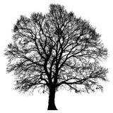 Silueta de un árbol solitario Fotos de archivo libres de regalías
