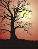 Silueta de un árbol viejo en puesta del sol Foto de archivo libre de regalías