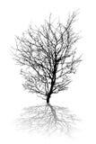 Árbol abstracto Fotos de archivo