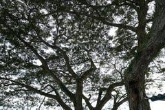 Silueta de un toldo de árbol en el bosque Imagen de archivo libre de regalías