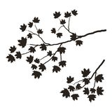 Silueta de una rama de árbol en un fondo blanco Una rama de un arce con las hojas Imagen de archivo