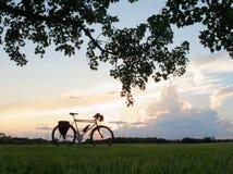 Silueta de viajar a la bici con las nubes y el follaje del árbol Imágenes de archivo libres de regalías