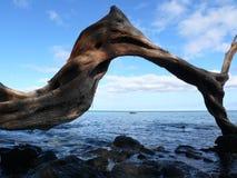 Silueta del árbol Imagen de archivo libre de regalías