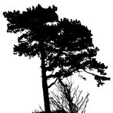 Silueta del árbol Foto de archivo
