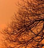 Silueta del árbol Fotos de archivo libres de regalías
