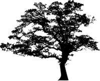 Silueta del árbol libre illustration