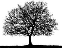 Silueta del árbol ilustración del vector