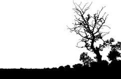 Silueta del árbol Fotografía de archivo libre de regalías