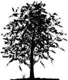 Silueta del árbol. Fotos de archivo