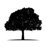 Silueta del árbol aislada en el vector blanco del fondo Imágenes de archivo libres de regalías
