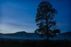 Silueta del árbol con el balanceo de la niebla adentro Imágenes de archivo libres de regalías