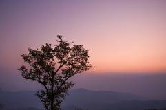 silueta del árbol con el cielo de la puesta del sol Fotografía de archivo libre de regalías