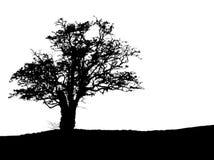 Silueta del árbol con el espacio de la copia Fotos de archivo libres de regalías